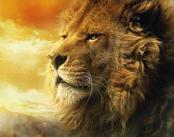 6-aslan