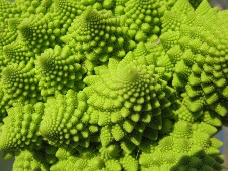 fractal-vegetable