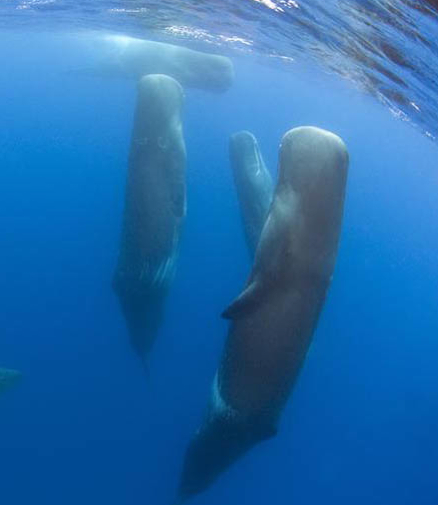 whaling coursework Of course, someone made the the new technology lets us study whales by flying into their exhaled breath the team behind it hopes to learn how whales impact ocean.