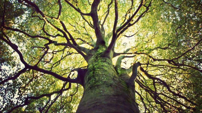 Tree of Acknowledgement